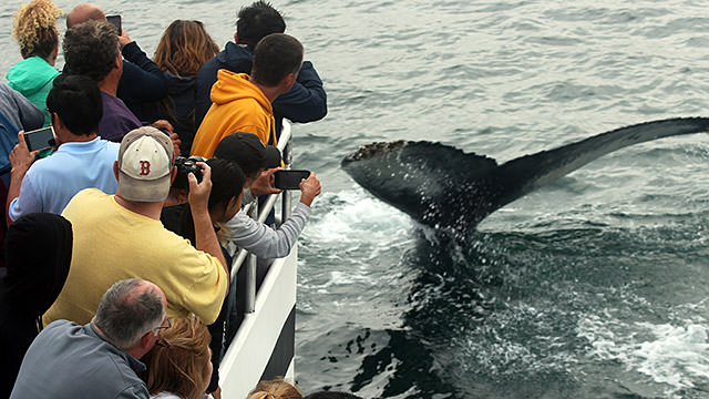 whale watchers photograph a humpback whale tail