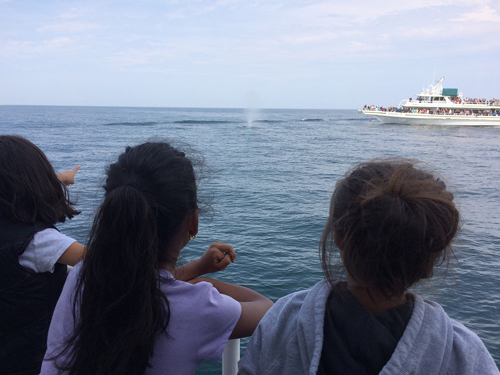 students on a boat point toward a surfacing whale