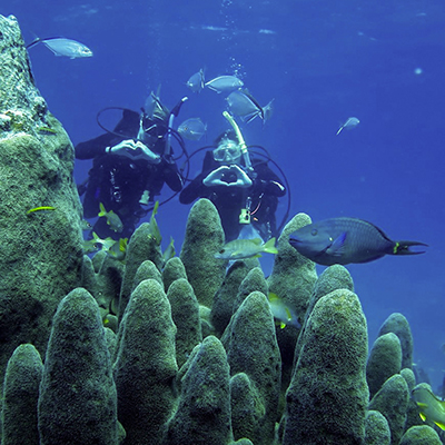 two divers behind pillar coral
