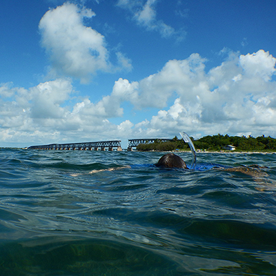 snorkeler in the water in front of a bridge