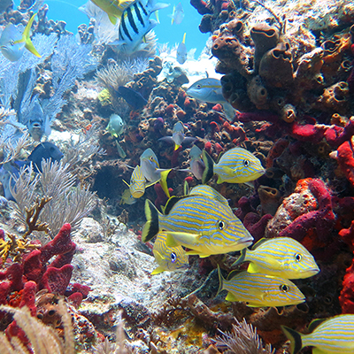 fish and invertebrates on coral reef