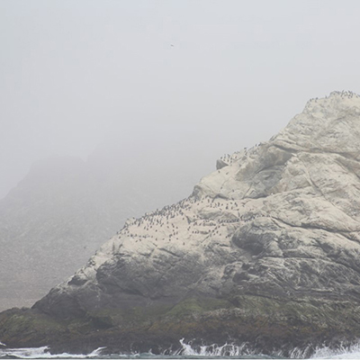 farallon islands in the fog