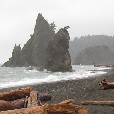 foggy beach with driftwood