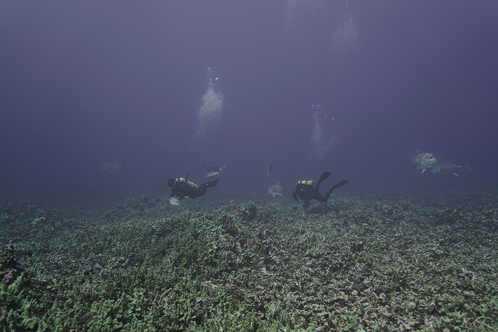 divers conducting benthic survey