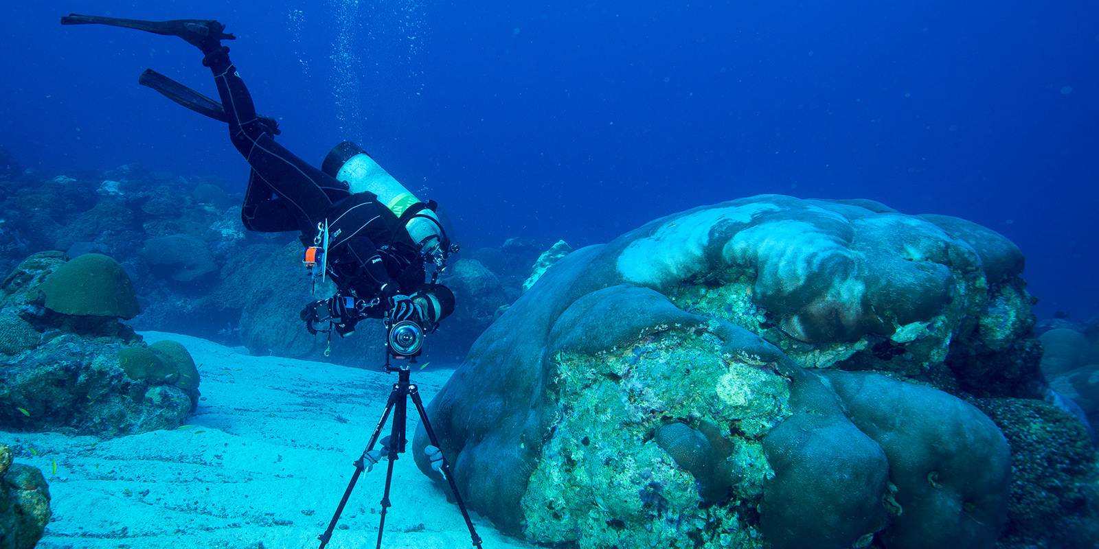 diver taking a photograph