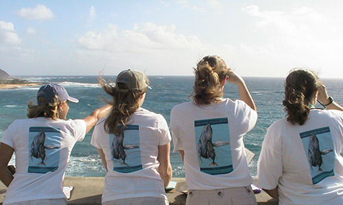 Volunteers looking for humpback whales during the Sanctuary Ocean Count project on Oahu