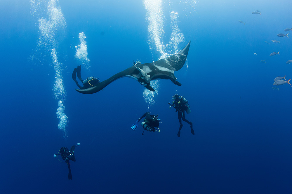 divers underwater with a manta ray