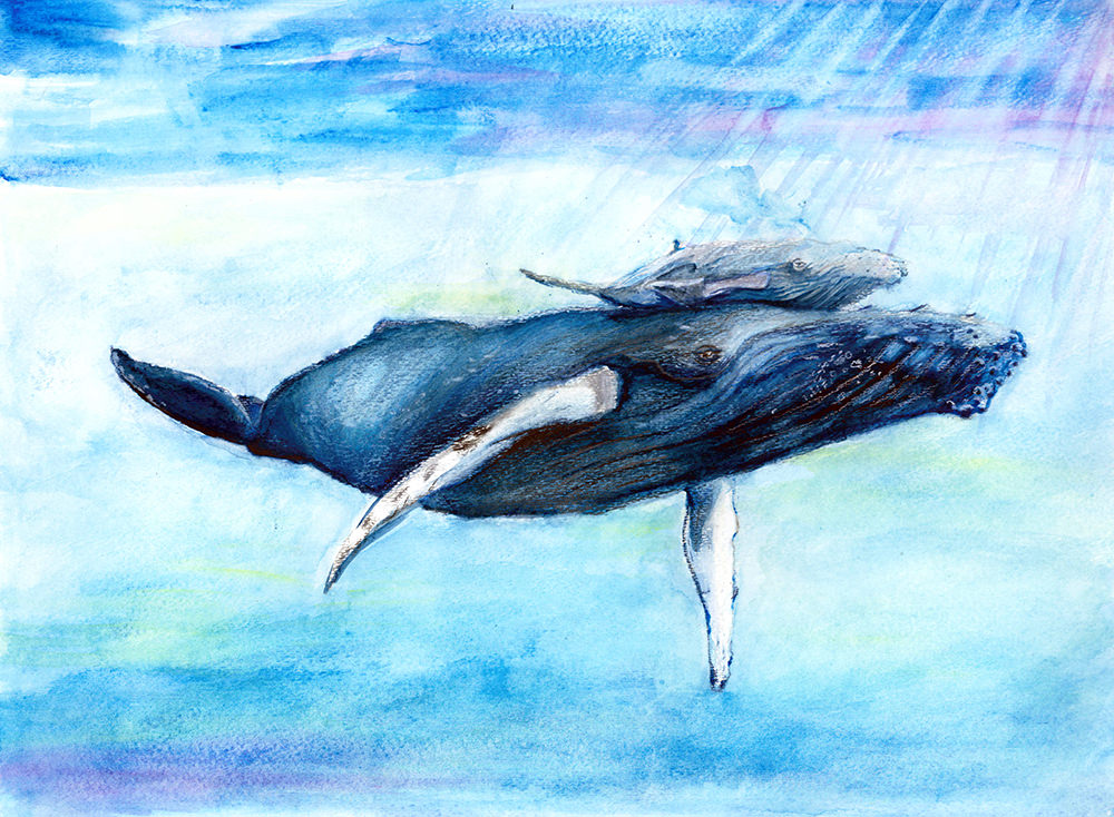drawing of humpback whale and calf