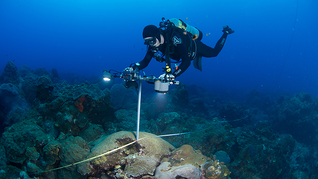 diver taking photographs of corals