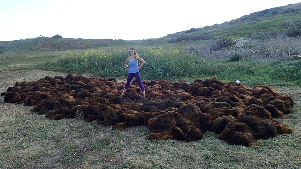 lindsay marks with piles of removed s. horneri