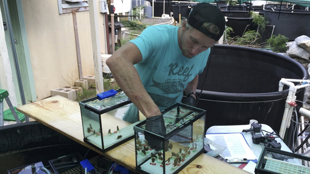 michael fox reaches into a fish tank with coral samples