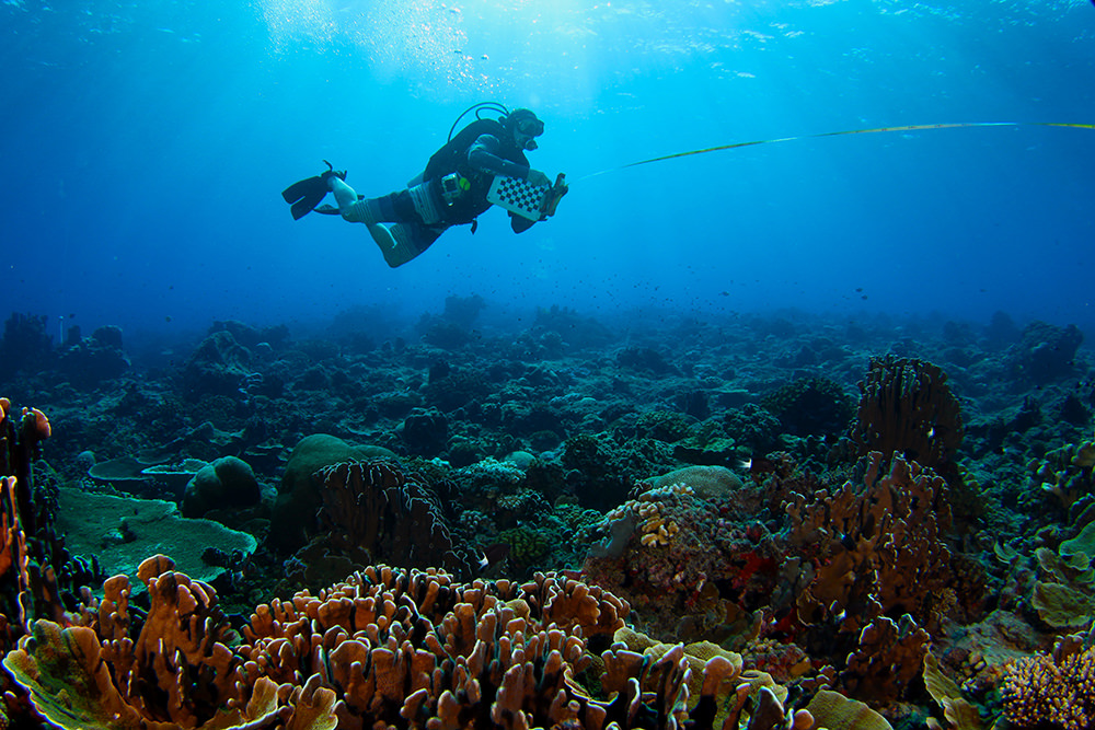 michael fox diving above a colorful coral reef