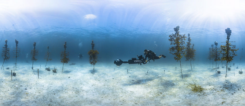 a diver holding a large camera swims through a coral nursery