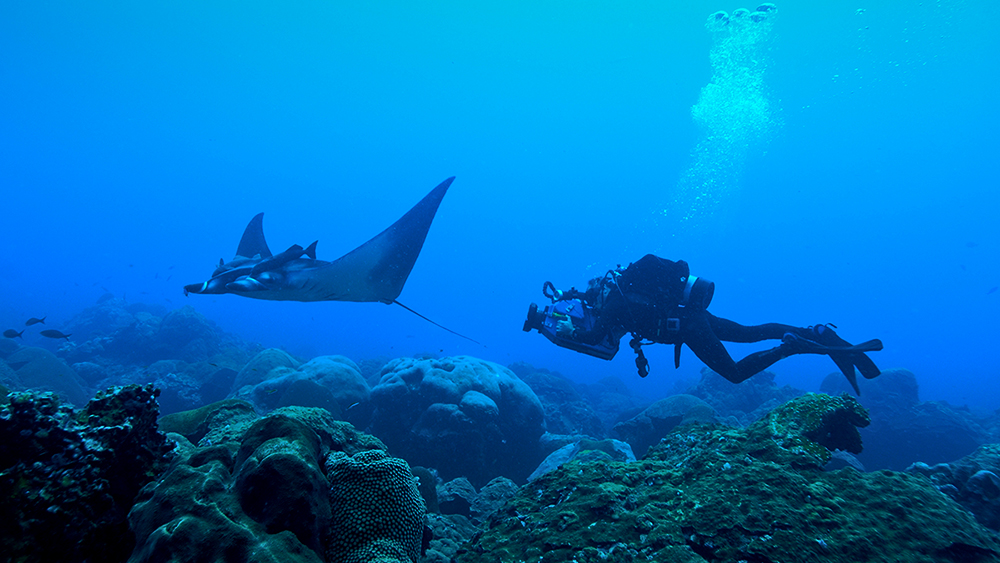 a diver photographs a manta ray