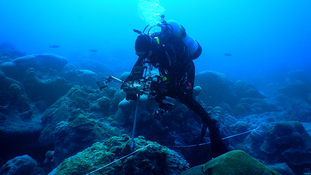 research diver surveying coral