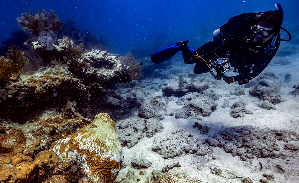 diver near diseased coral