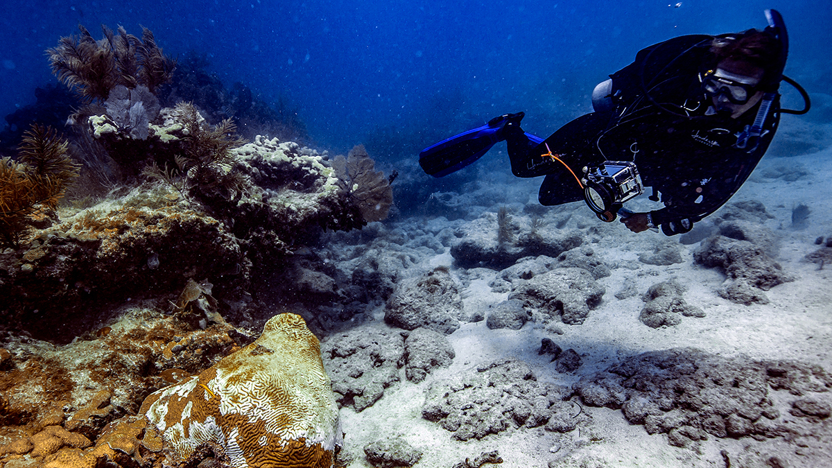 scientist diving near coral