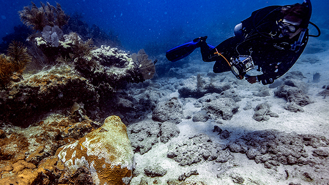 Scientists work together to solve a coral disease mystery in Florida Keys National Marine Sanctuary