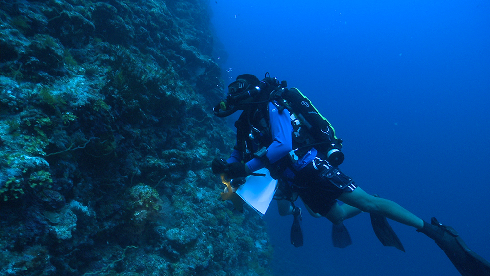 coleman diving near a coral and rock ledge