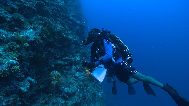 diver near corals