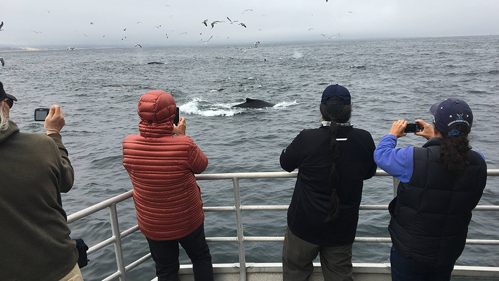 people whale watching on a boat
