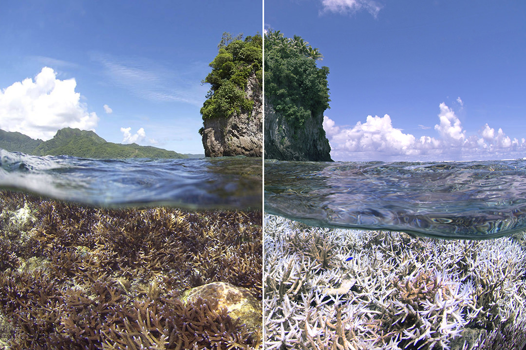 two photos show a bleaching event that occurred over three months