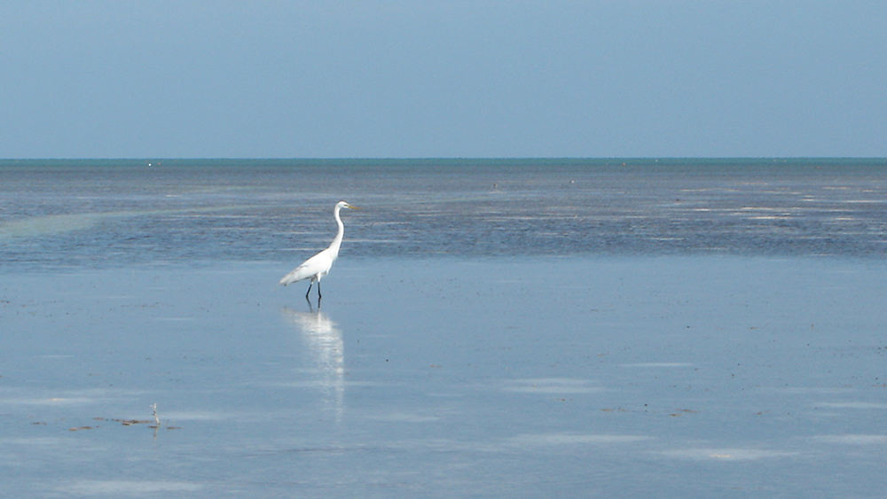 a bird wading on a tidal flat