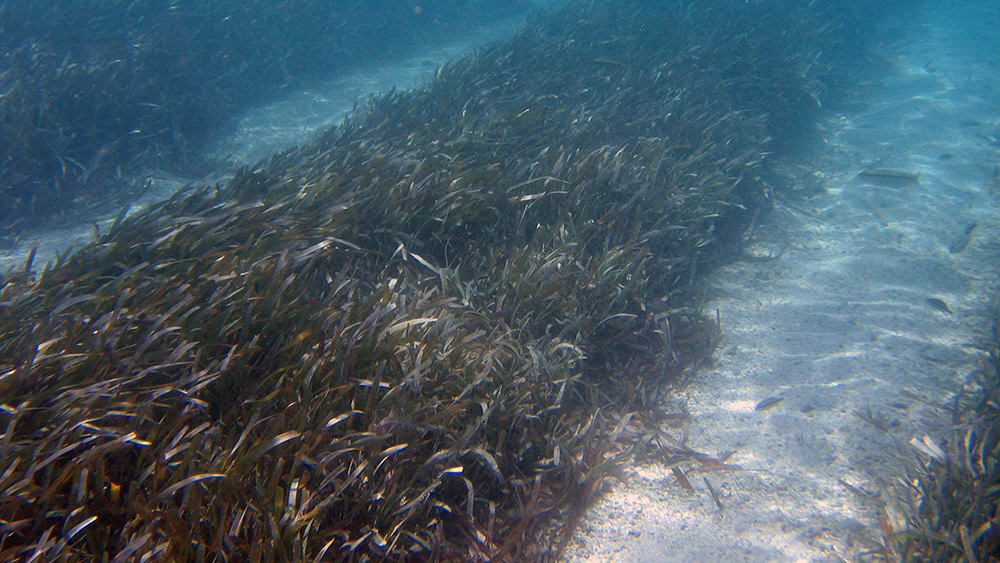 seagrass and wide sandy areas