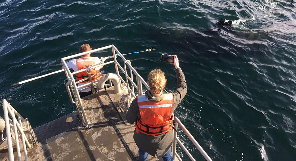 two people on a boat near a basking shark