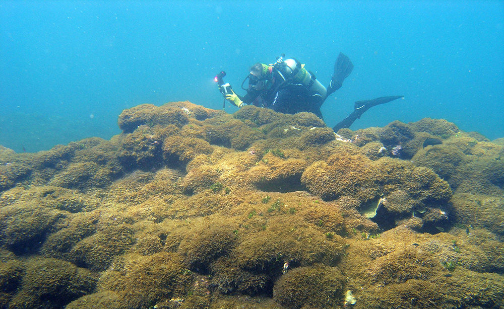 diver documenting algae that covers coral