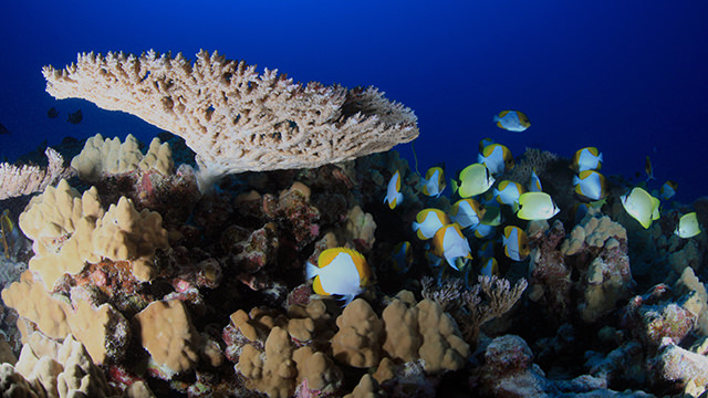 fish swimming near healthy coral