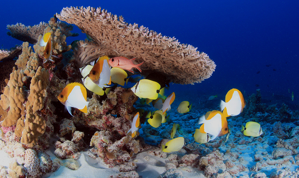 fish swimming around healthy coral