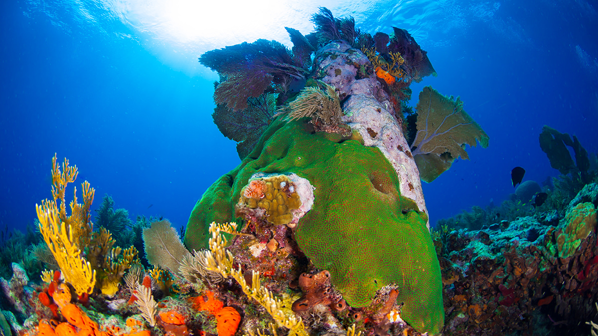 healthy coral and other invertebrates