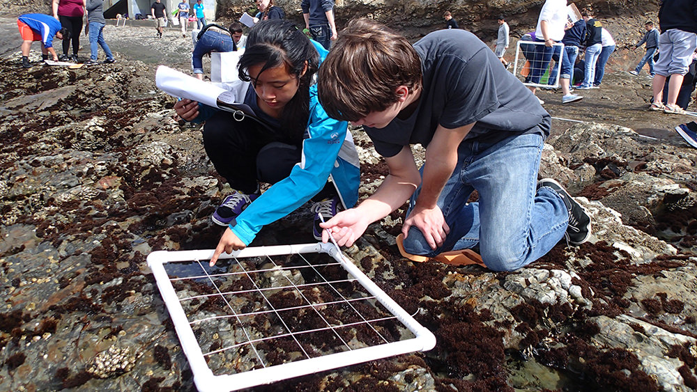 students looking at tide pools
