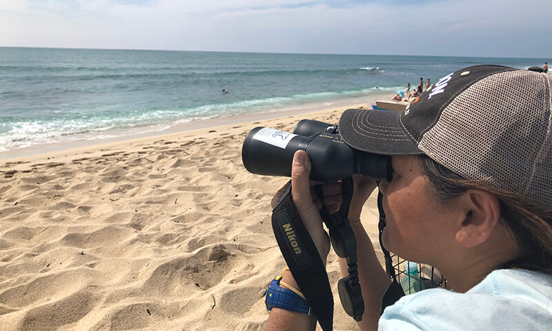 A woman using binoculars to whale watch from a beach