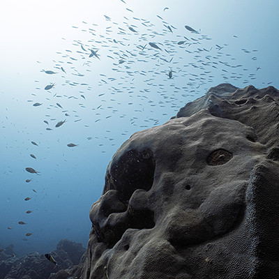 fish over a large coral head