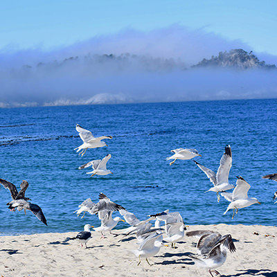 birds on a beach with fog in the background
