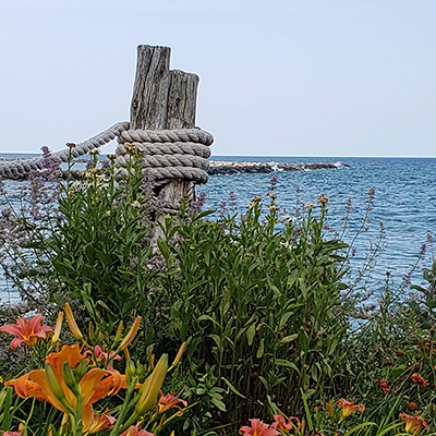 flowers and other plants in front of lake huron