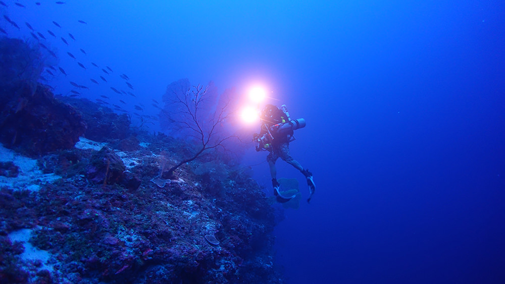 diver swimming near a mesophotic reef