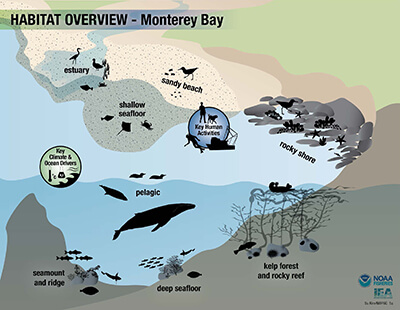 Graphic Breaking Down Habitat of Monterey Bay National Marine Sanctuary