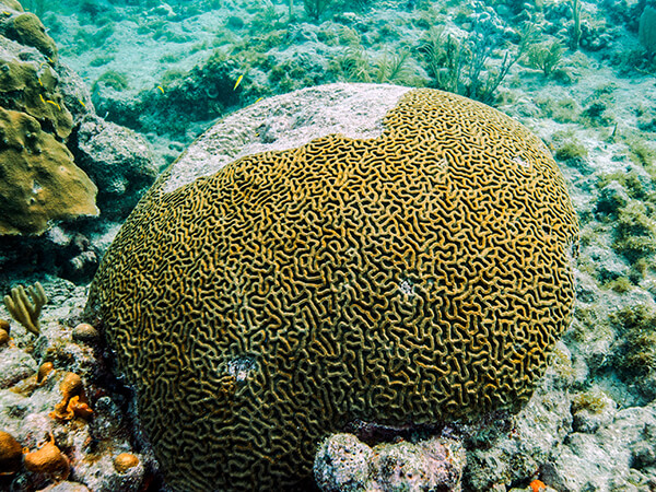 Coral with spots of disease overtaking it