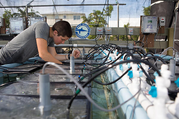 A scientist monitors growing corals
