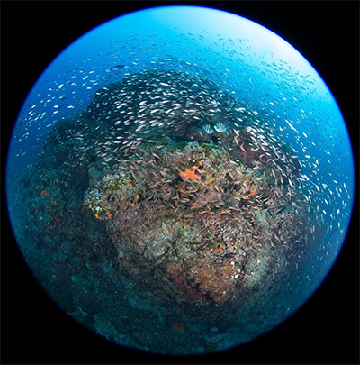 Fish eye view of a coral reef