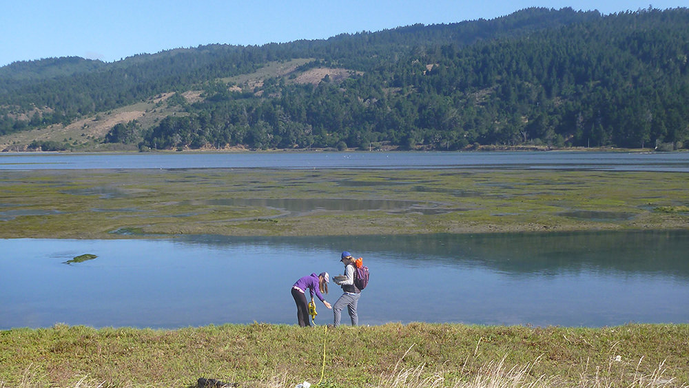people sampling in a wetland