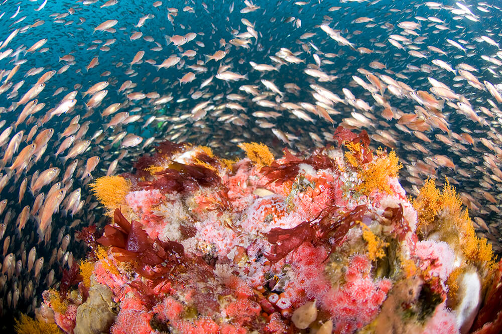 Fish swirl around a coral reef