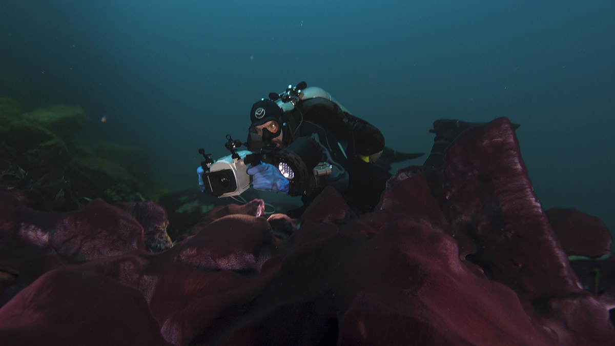 diver filming microbial mats