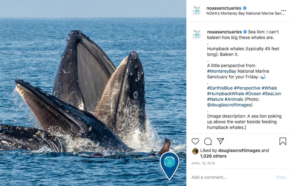 instagram post with a picture of humpback whales and a sea lion