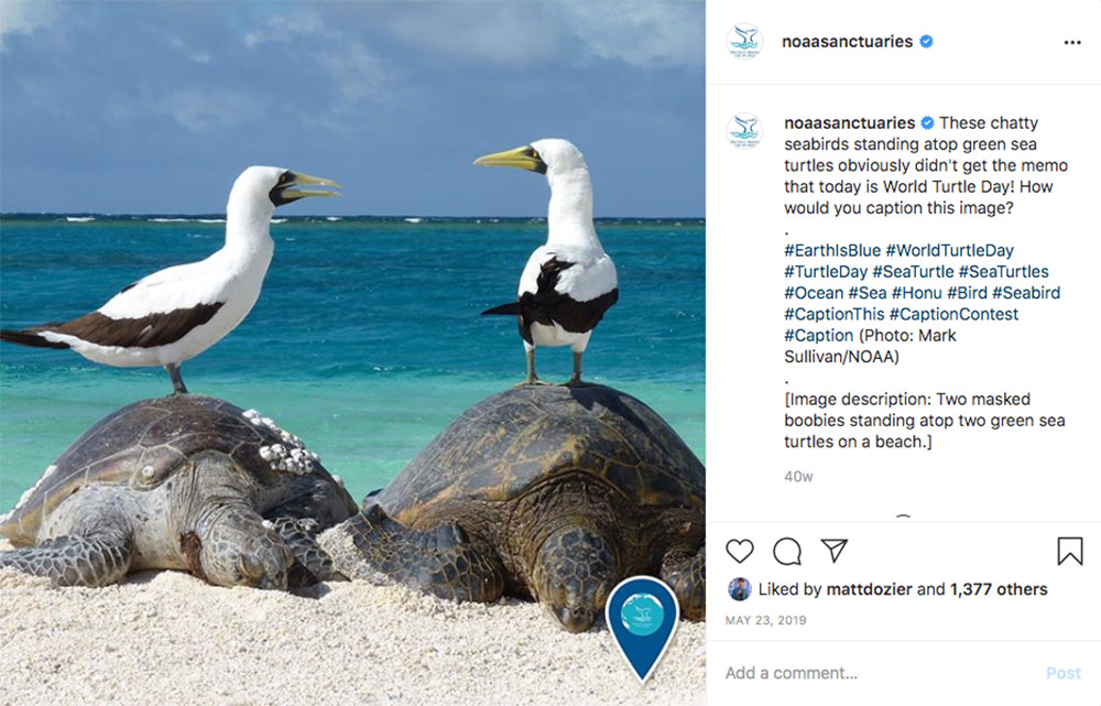 instagram post of two birds standing on two green sea turtles