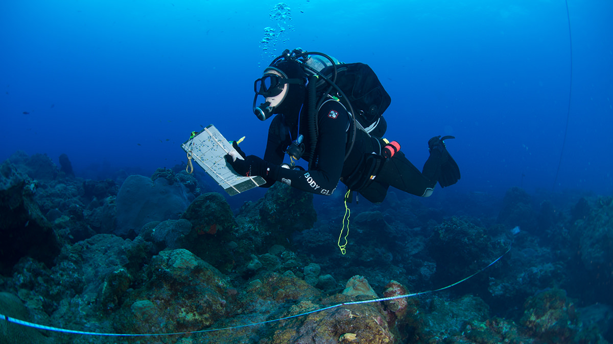 scuba diver holding a dive slate above a coral reef