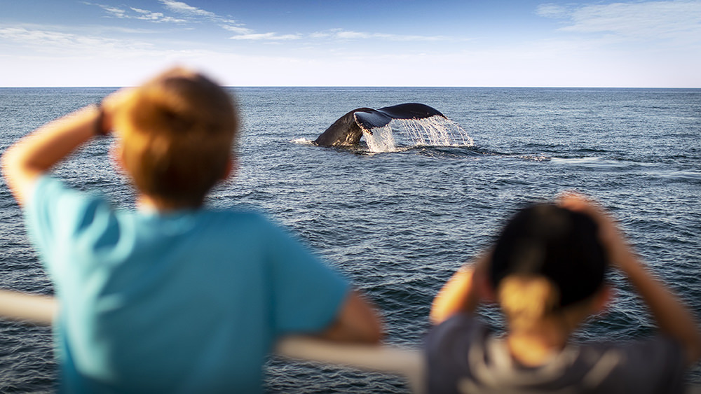 two children watching a whale surface